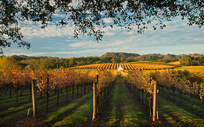 Wine Country Workshop