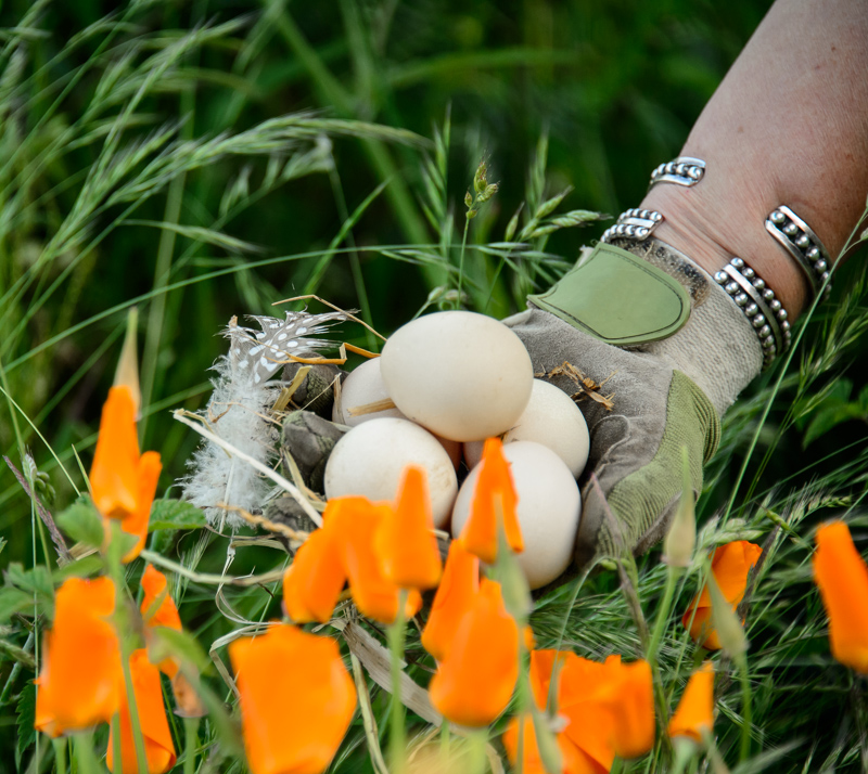 Eggs in a gloved hand